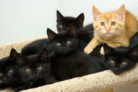 One-of-these-kitties-is-not-like-the-other...