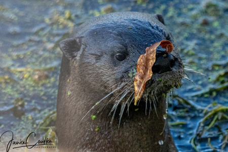 otter-something-on-my-face-1-of-1-3c17995c1260d7396869eb9969db02c47f664749