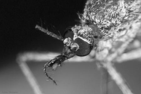 mosquito-eye-1d-b4d2dc402c6184b78cad2ec7b48f1c302cc0de86