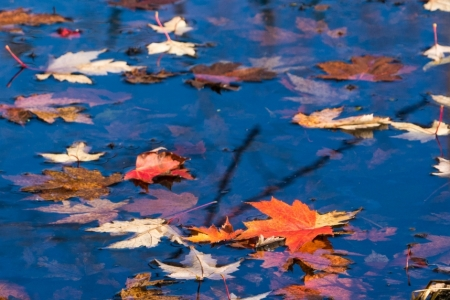 leaves-on-dark-water-1-of-1-9f751093bc0d4bac2797e930c05309086c41abac